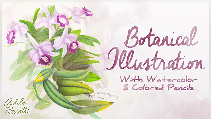Botanical Illustration with Watercolor and Colored Pencils