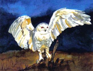 Paula Atwell Snowy Owl